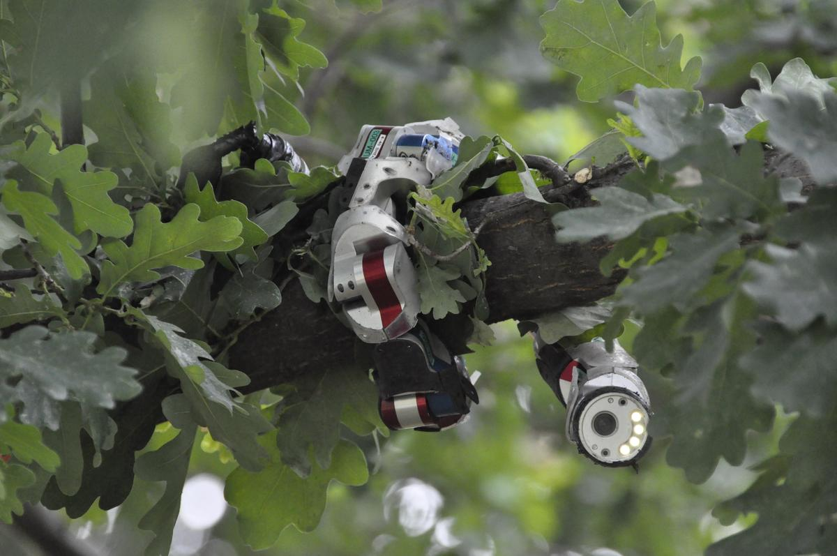 CMU's Biorobotics Lab built a modular snake robot that can climb trees or explore pipes