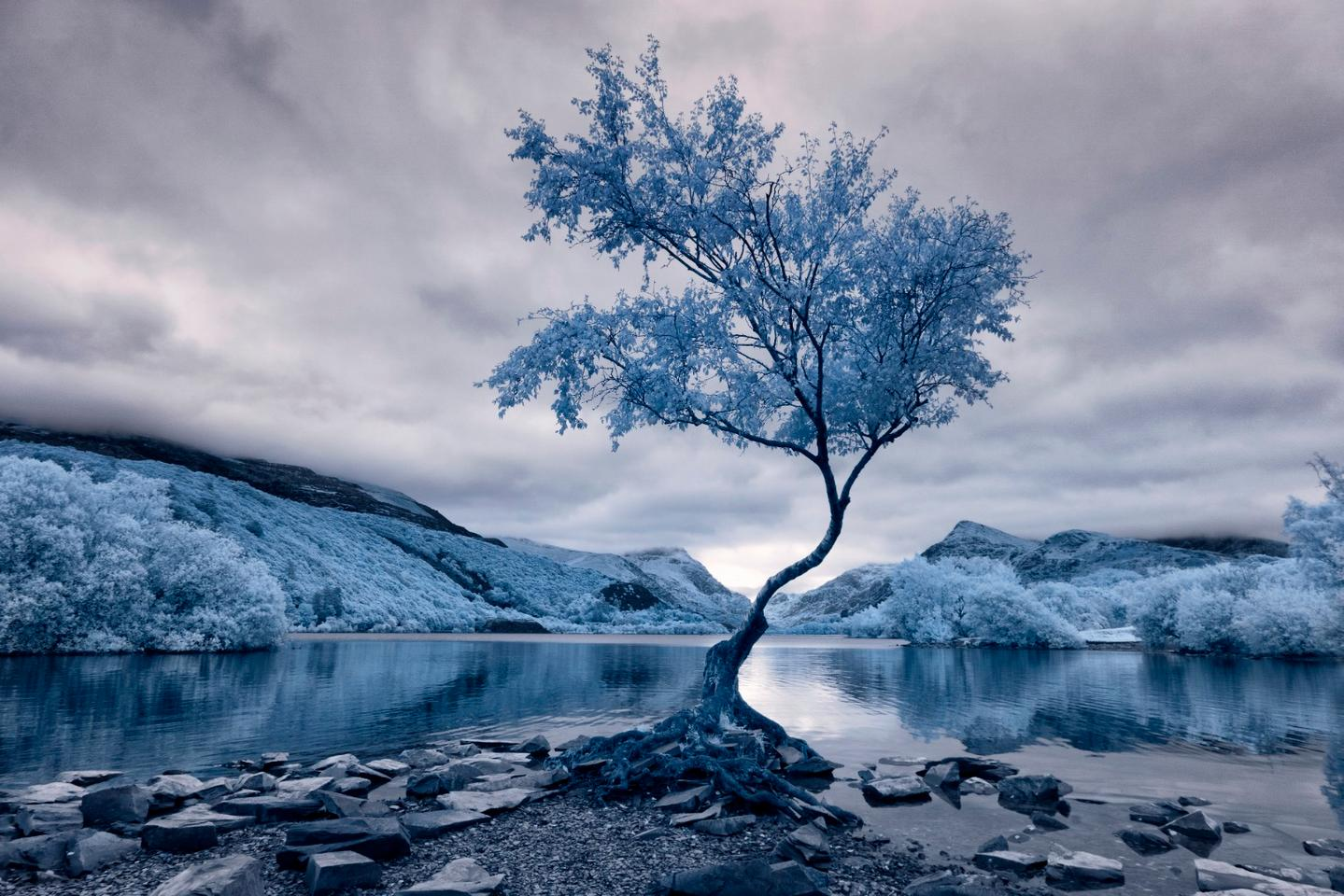 First place winner in the Landscape category - Lonely Tree