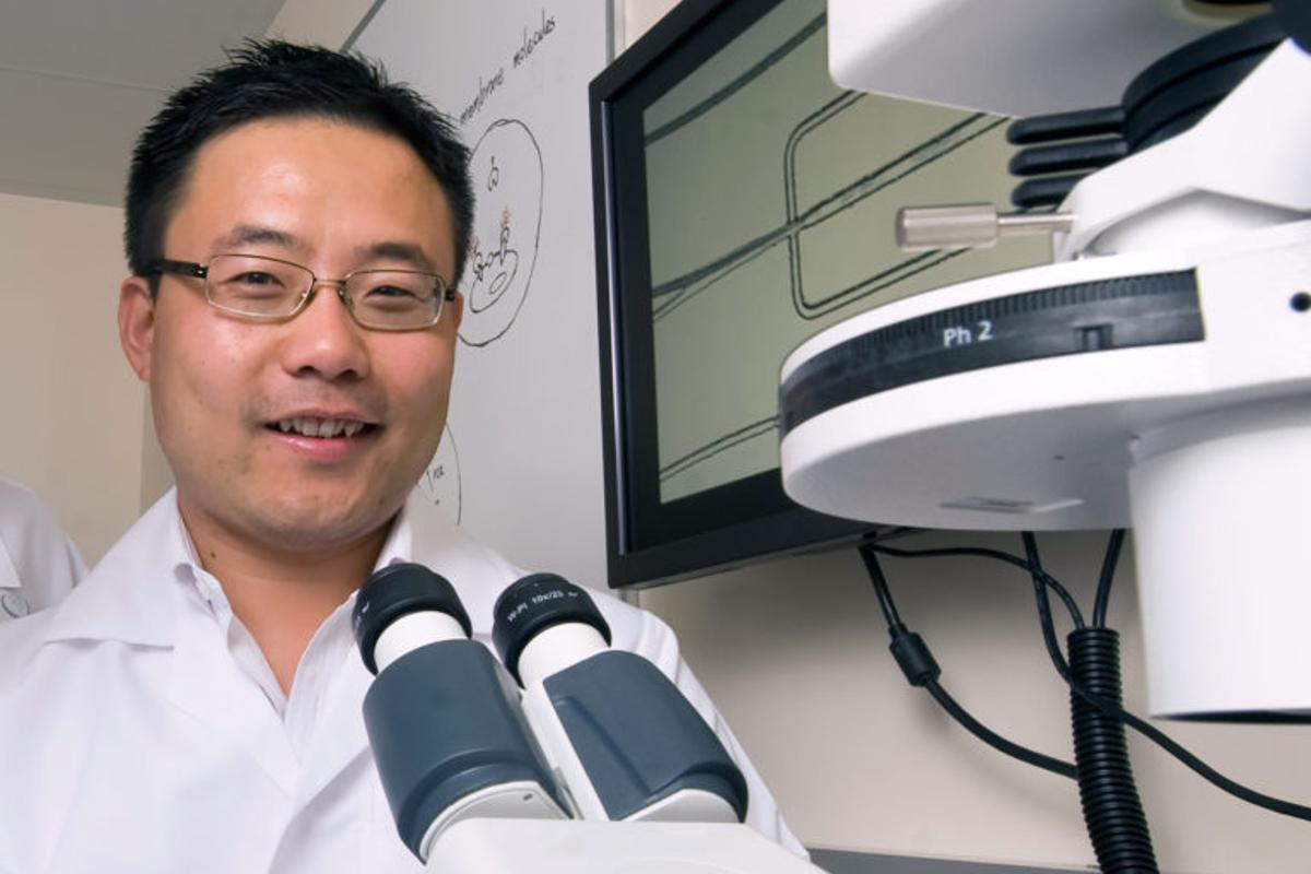 UCI's Weian Zhao and his team have developed a new technology that promises to greatly accelerate a form of targetedcancer treatment