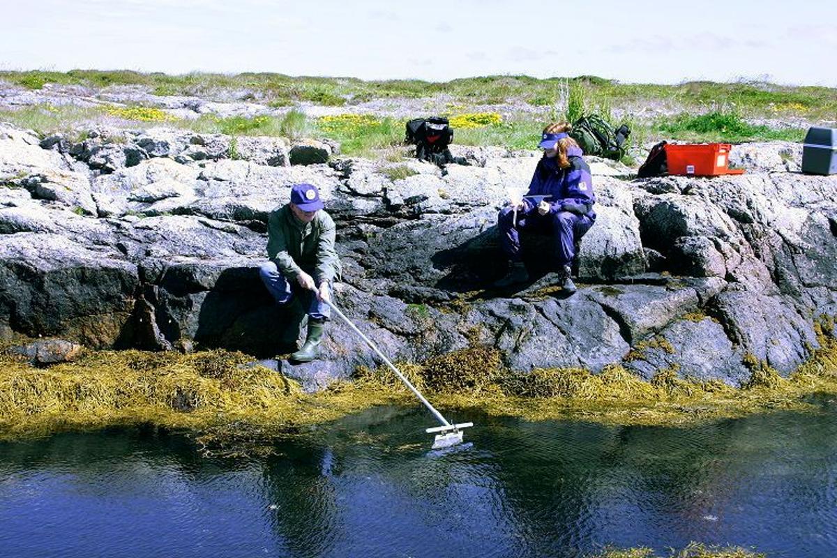 Workers harvest sunscreen-producing bacteria from Norway's Trondheim fjord (Photo: Credit Geir Klinkenberg, SINTEF)