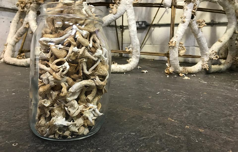 The material was made out of cardboard and the mycelium of oyster mushrooms