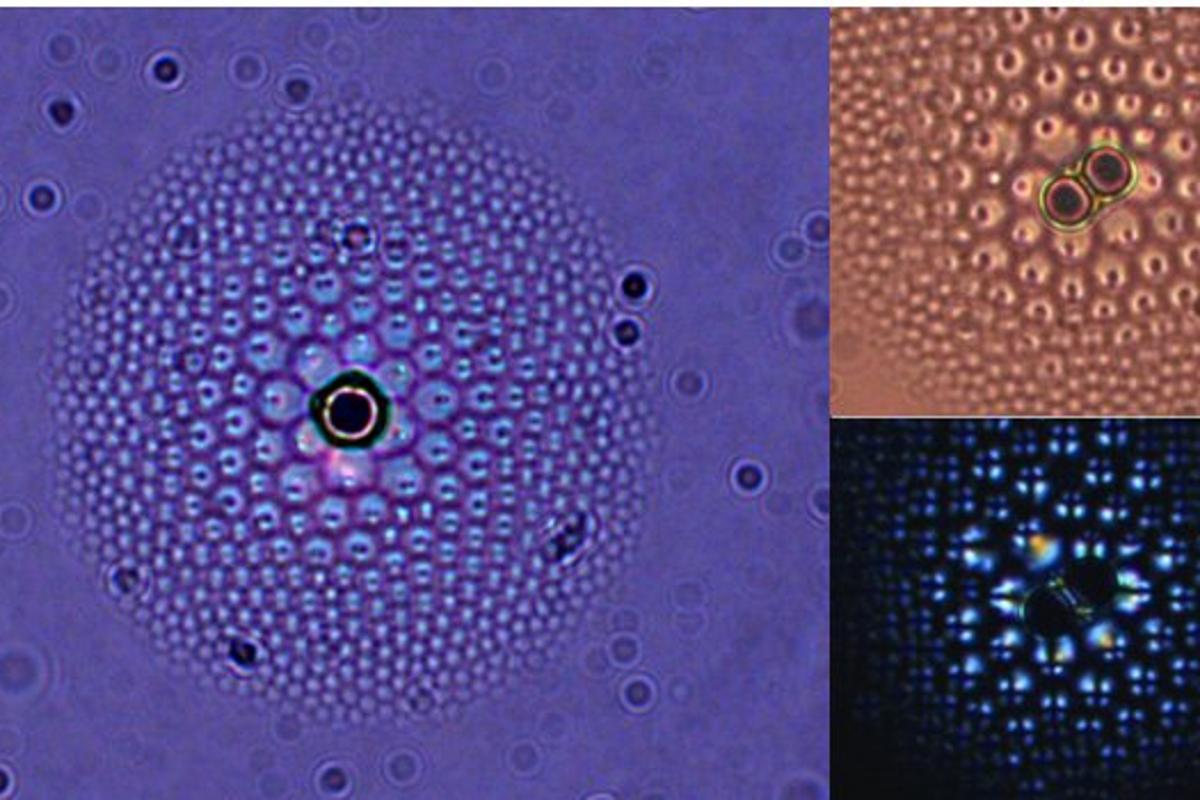 "A liquid crystal ""flower"" under magnification (Photo: University of Pennsylvania)"