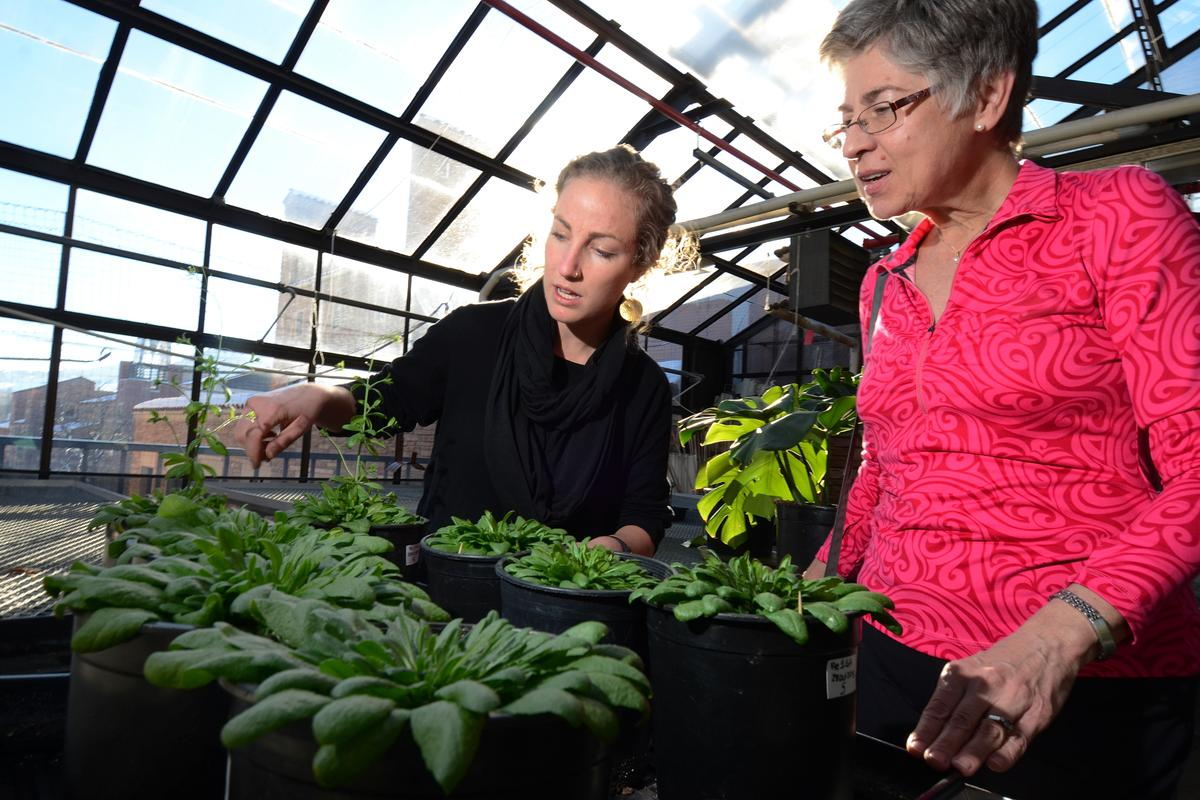 Researchers have discovered conditions that would allow plants to grow quickly in optimal conditions, while still developing a nutrient that would otherwise be absent