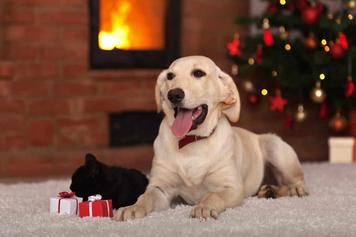 New Atlas rounds up the best gifts for your pets, or pet-focused family and friends