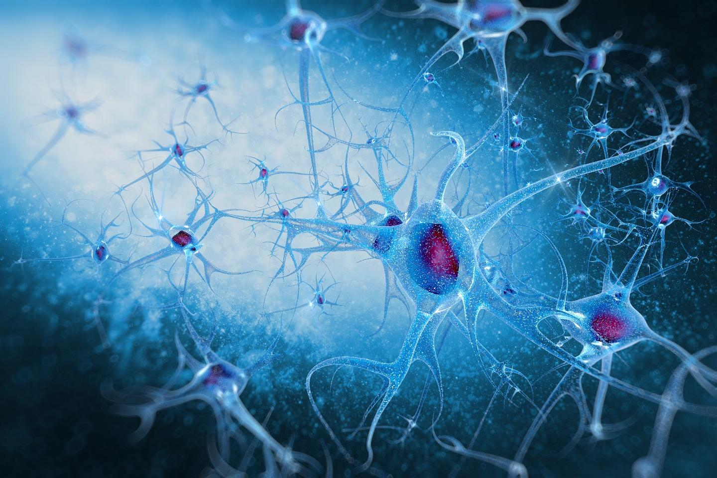 Scientists hope that aneurodevelopmental model of Williams syndrome will lead to broader insight intothe human social brain