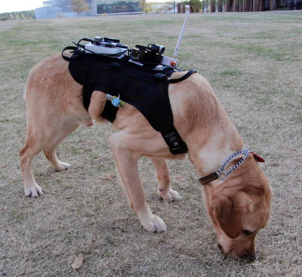 The harness contains sensors that allow for environmental monitoring, dog monitoring and active communication (Photo: Alper Bozkurt)