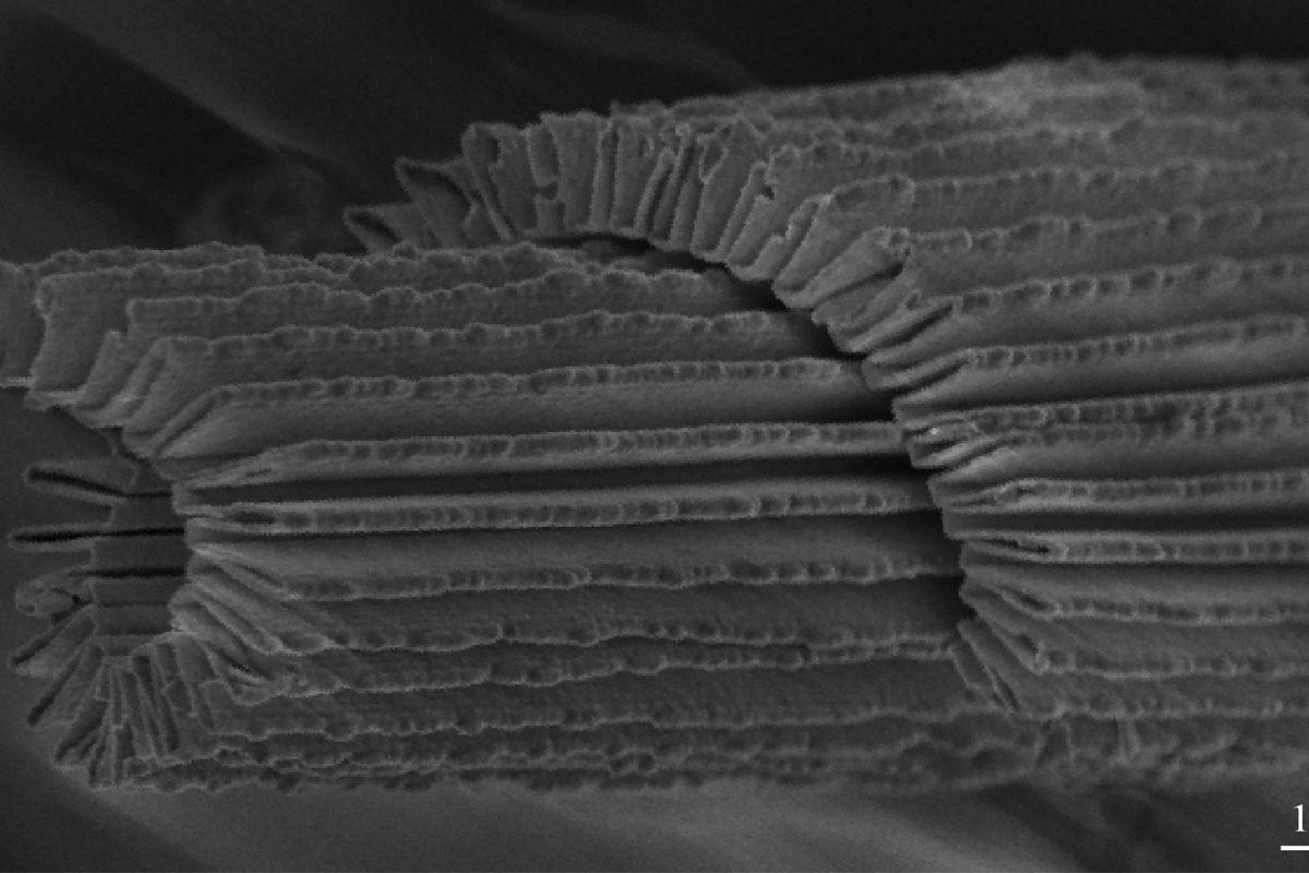 """Researchers at North Carolina State University have created a """"nano-accordion"""" material that conducts electricity and is transparent, flexible, and stretchable"""