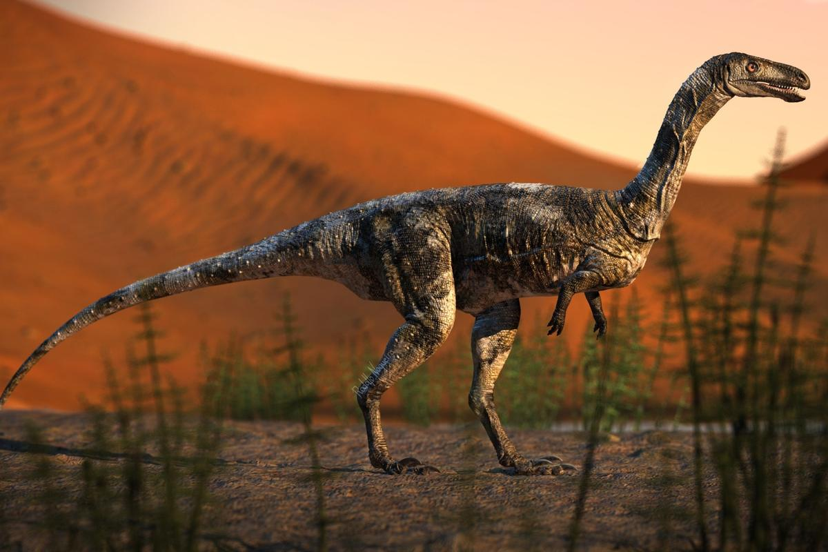 Vespersaurus was a small therapod dinosaur, measuring only 80 cm (31.5 in) tall, 1.6 m (5.2 ft) long and weighing 15 kg (33 lb)
