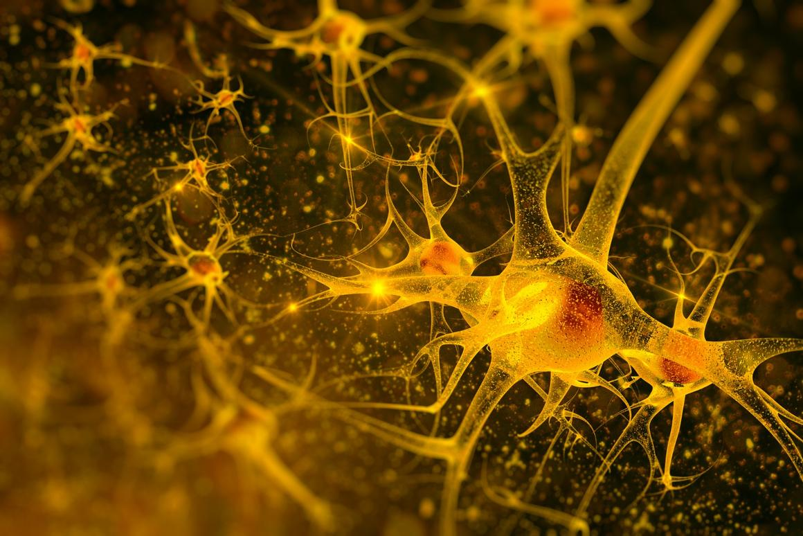 """ew insights into neuronal firing patterns in the enteric nervous system show the complexity of our """"second brain"""""""