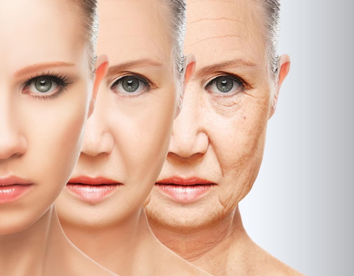 It's hoped two new compounds on the cusp of human trials could combat Alzheimer's disease by slowing the body's aging processes