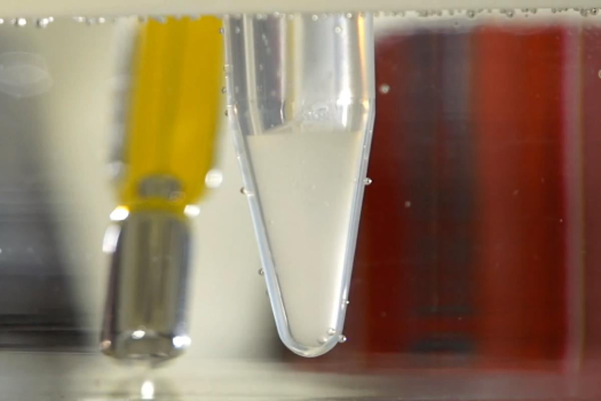 A vial of the clear hydrogel turns to a white semi-solid as it's heated to body temperature