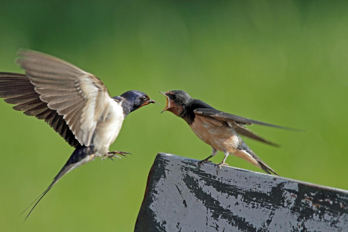 Migratory birds could be hit hardest by earlier springs