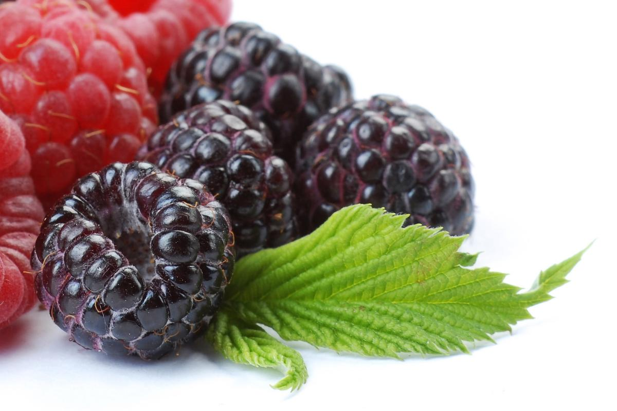 Scientists have yet to determine which compounds within the berries are responsible