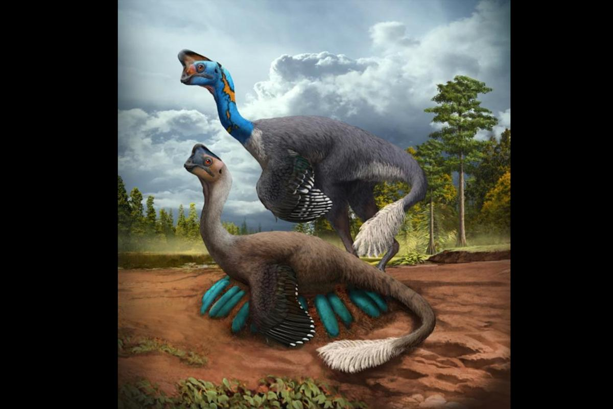 An illustration depicting the oviraptorosaur brooding its nest
