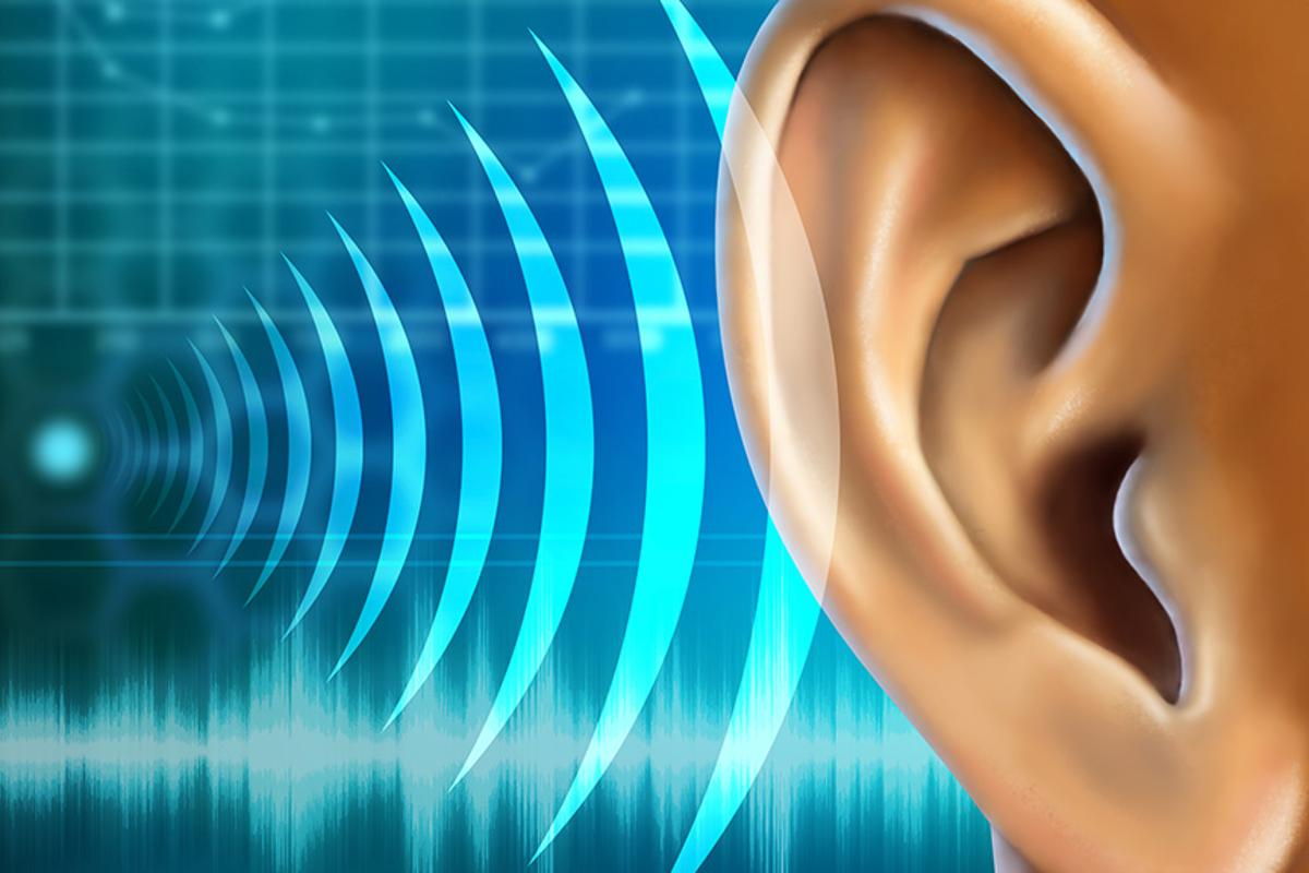 Researchers have regenerated auditory hair cells in adult mammals for the first time (Image: Shutterstock)