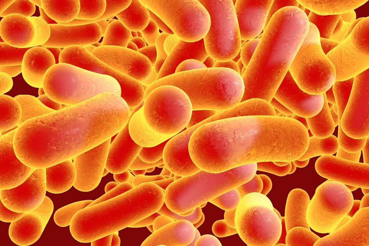 """A gene known as mcr-3.1 that grants bacteria like Salmonellaresistance to""""last resort"""" antibioticshas been detected in a patient in the US"""