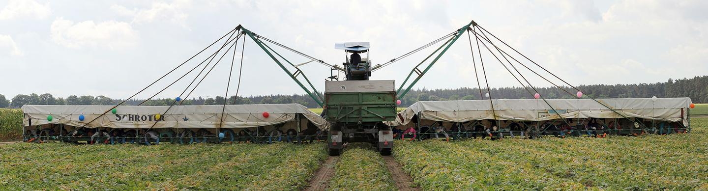 """Agricultural vehicles known as """"cucumber flyers"""" enable as many as 50 seasonal workers to harvest crops"""