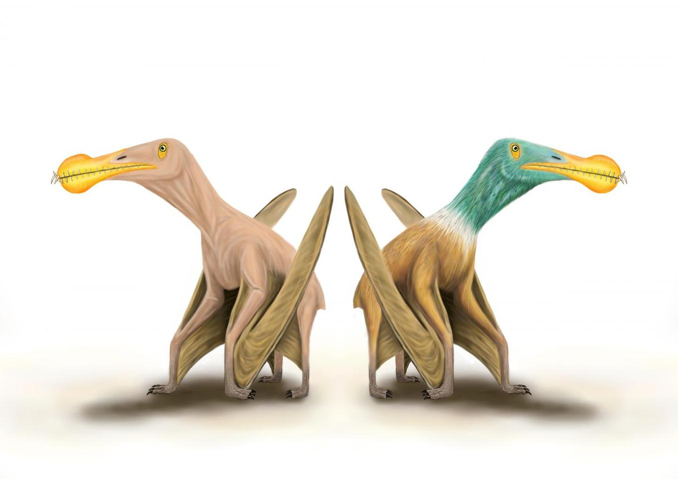 "An artist's illustration of a ""naked"" pterosaur (left) and a feathered one (right)"