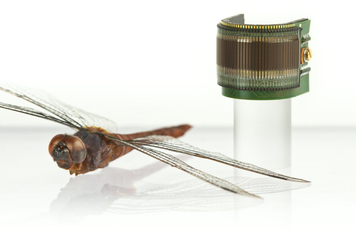 CurvACE reproduces the architecture of the eyes of insects and other arthropods