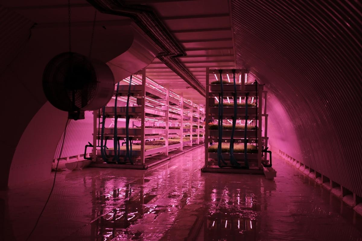 Growing Underground aims to produce fresh produce with zero effect on the environment