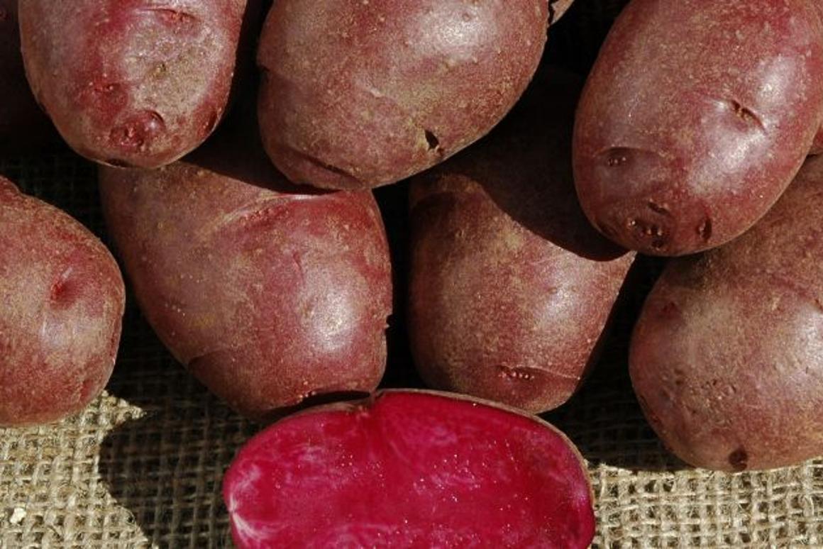 Purple potatoes, anyone?