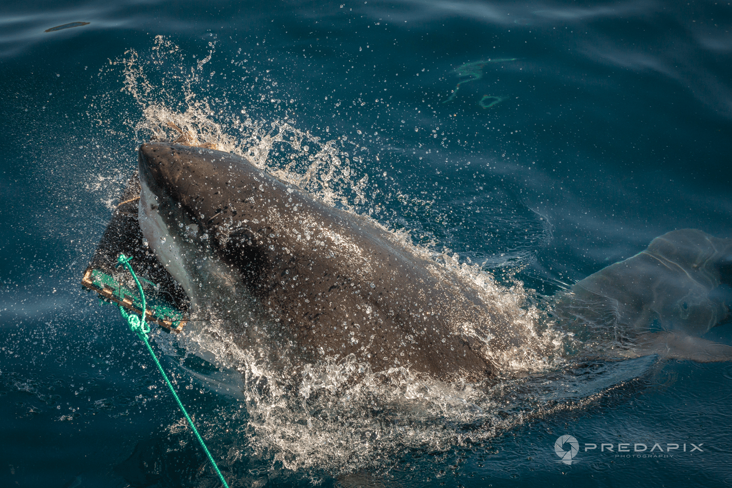 According to the 2018 Global Shark Attack Summary, 53 percent of shark attacks were on surfers
