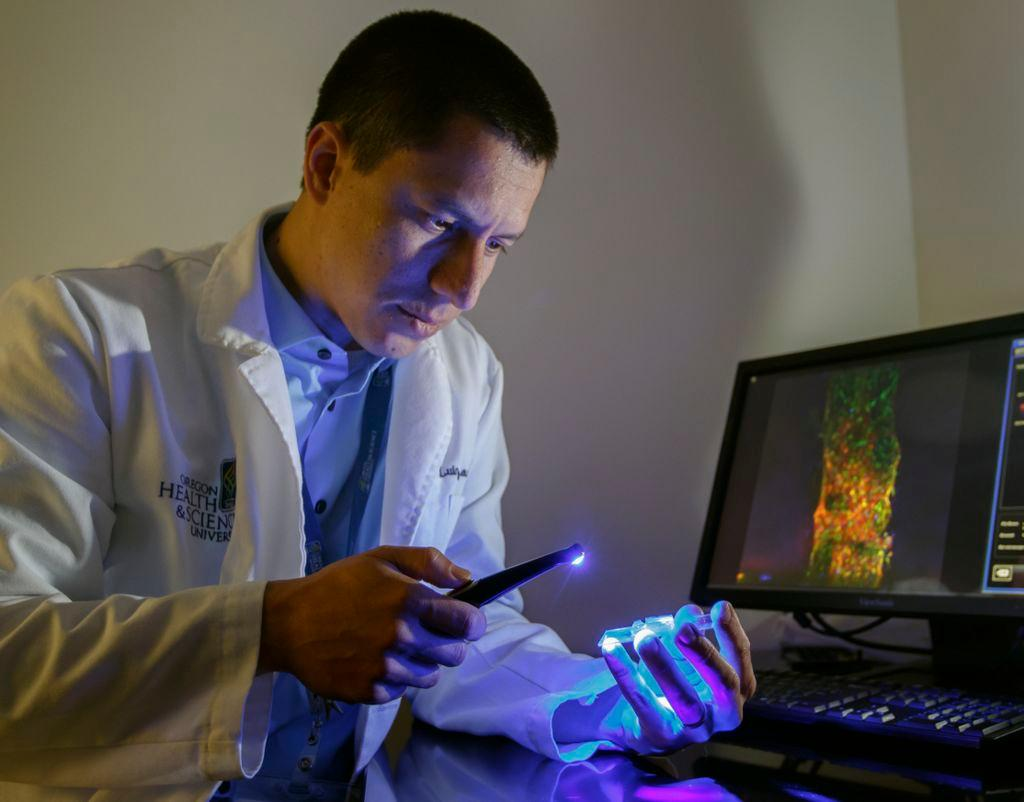 Luiz Bertassoni and his team have developed a method of engineering artificial blood vessels that can help regenerate teeth