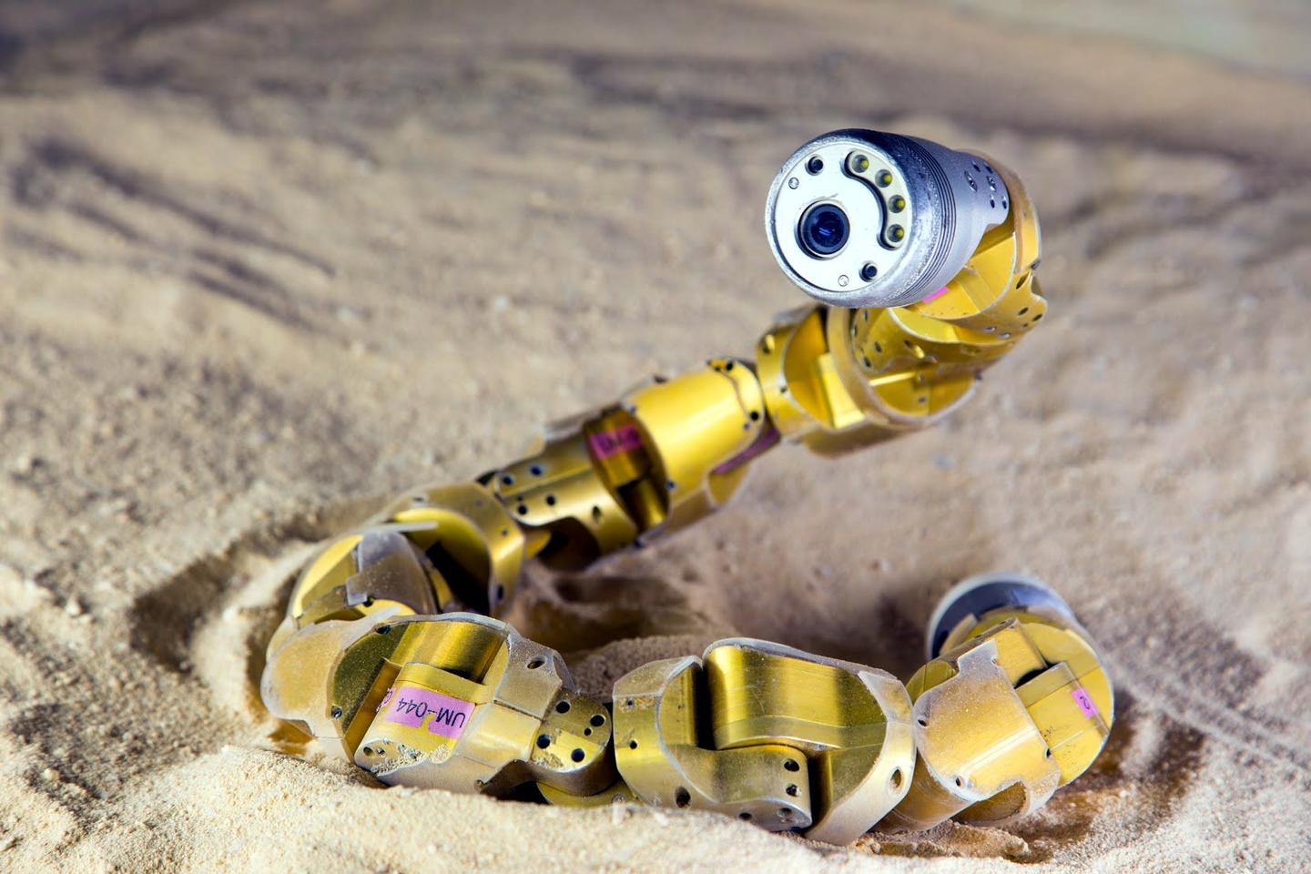 Carnegie Mellon's snake robot – now better able to ascend sandy slopes (Photo: CMU)