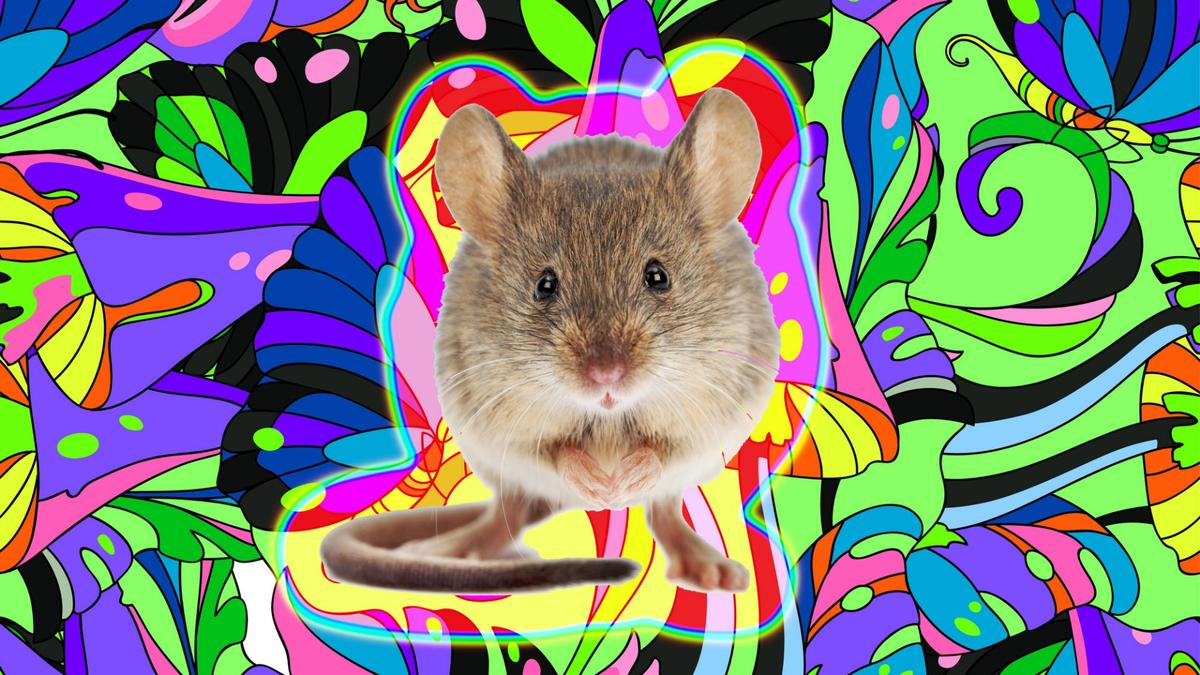 The research offers insight into what happens to our brain when we visually hallucinate (Credit: Background:d-naya.Mouse:icefront/Depositphotos)