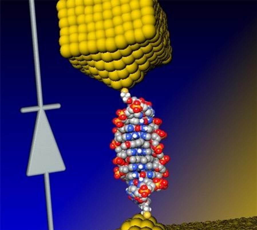 A group of researchers has produced the world's first DNA-based diode