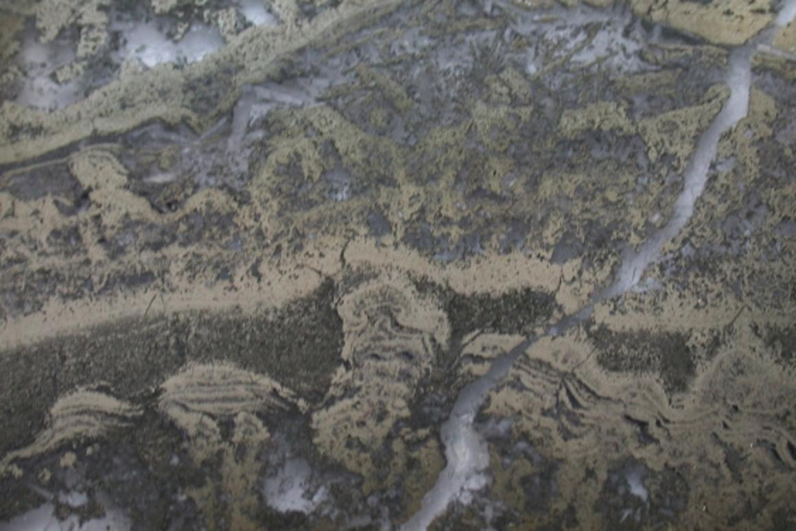 A microscopic photo of the stromatolites, showing pyrite mixed with organic matter