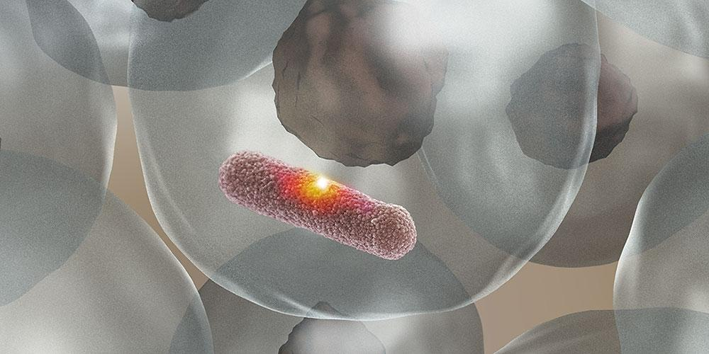 MPO gives the immune system a sniper-like ability to burn holes in bacteria