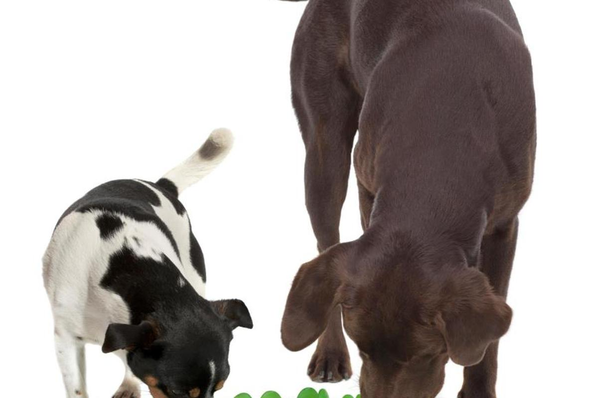 Northmate's Green makes dogs work for their meal