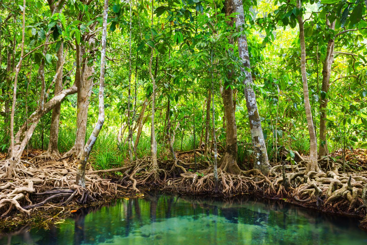 Engineers have created a new solar still for water purification, inspired by the water transport process of mangrove roots