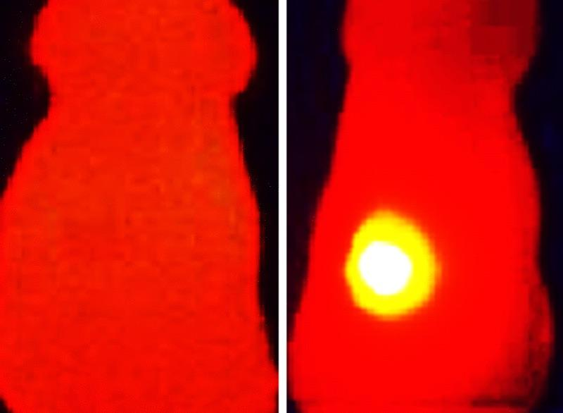 An infrared image of a tumor injected with melanin-loaded nanoparticles (right), compared to one that had just nanoparticles with no melanin (left)