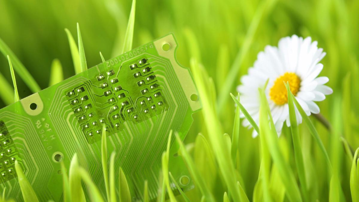 A new DARPA program plans to turn plants into remote sensors that can detect a variety of environmental signals