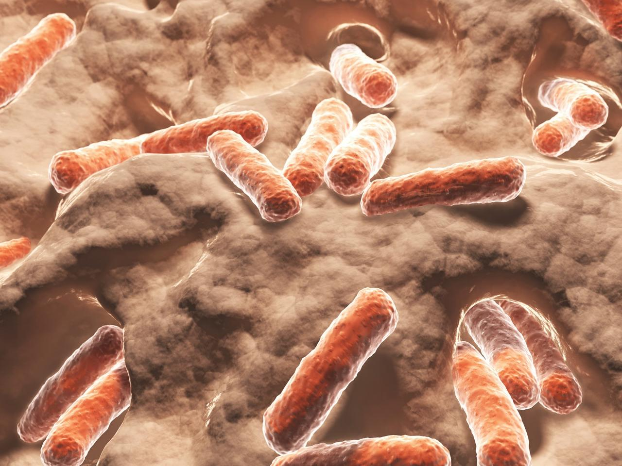 Researchers havediscovered the immune system can directly alter populations of certain bacteria in the gut that affect how dietary fats are absorbed