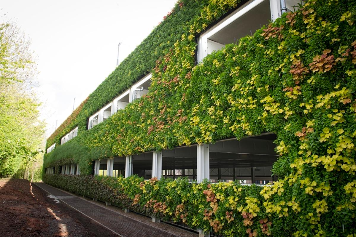 The living wall features over 20 different predominantly native and wildlife-friendly plant species