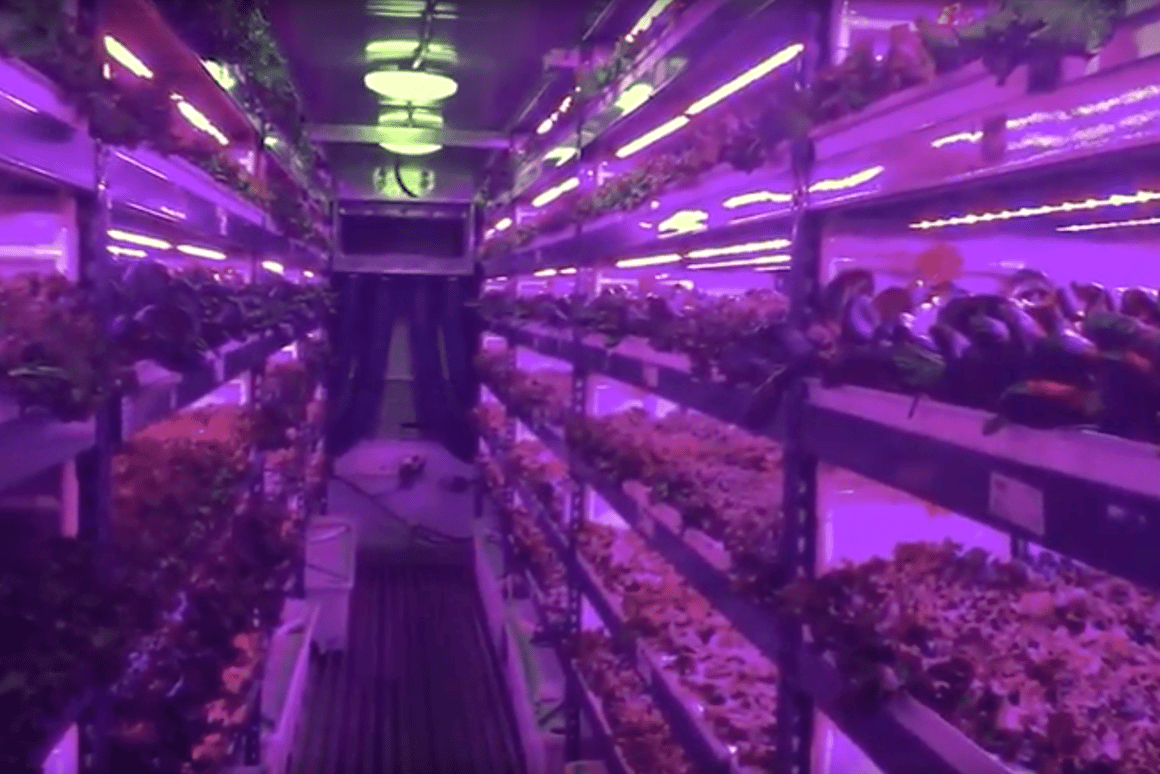 The world's largest vertical farm is due to be built in Dubai, to cater to Emirates Airlines passengers