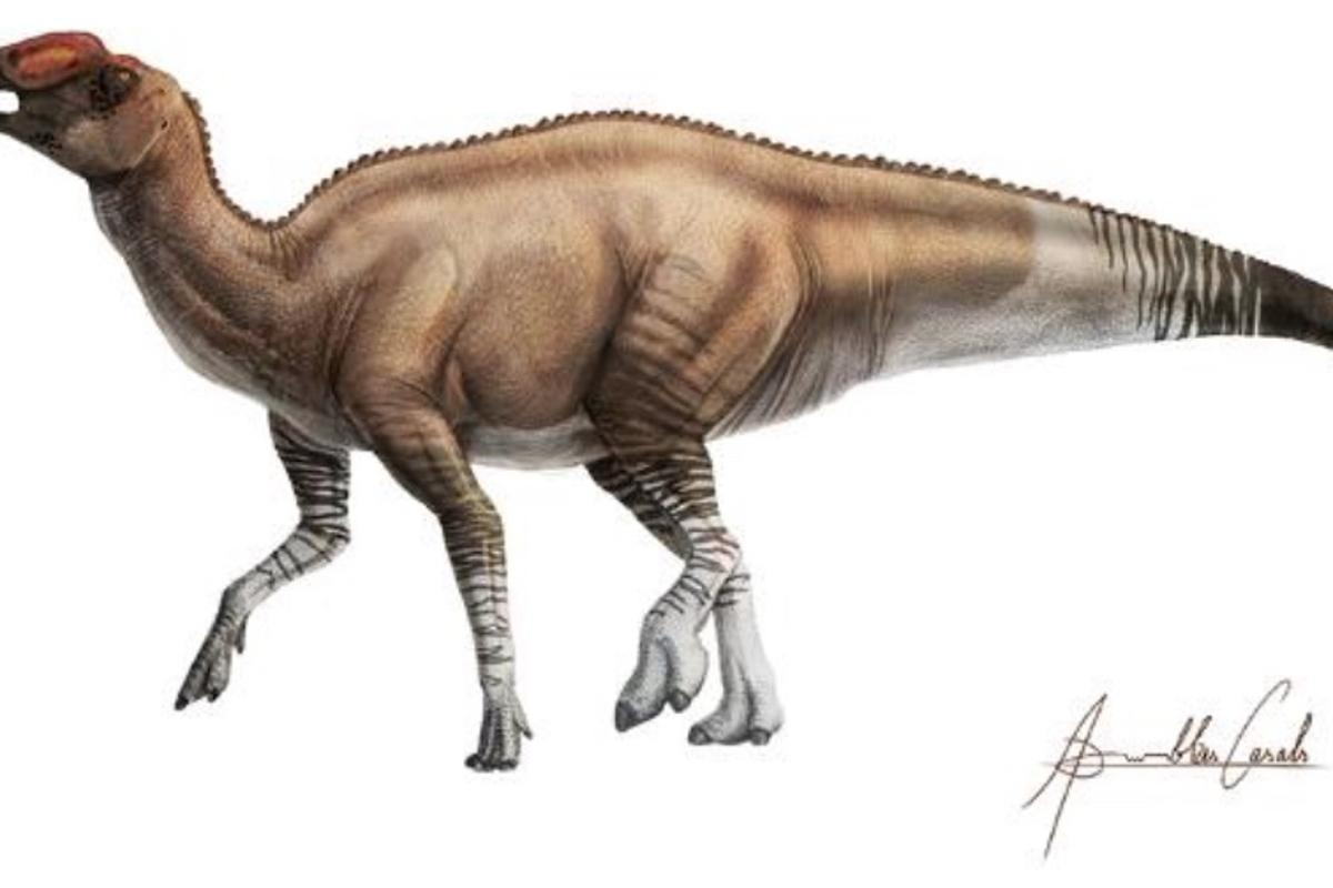 A illustration depicting what Aquilarhinus palimentus  may have looked like in life