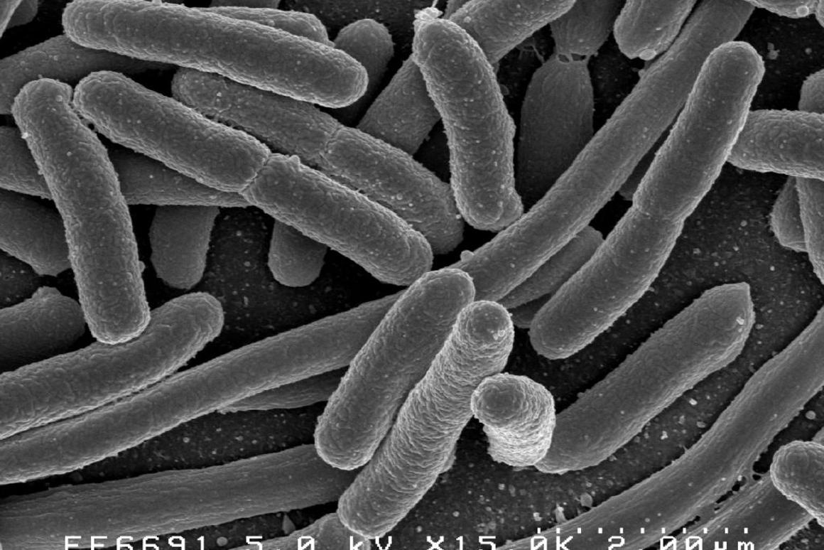 Our vibrant gut microbiome is being discovered to have an effect on everything from PTSD to Alzheimer's disease