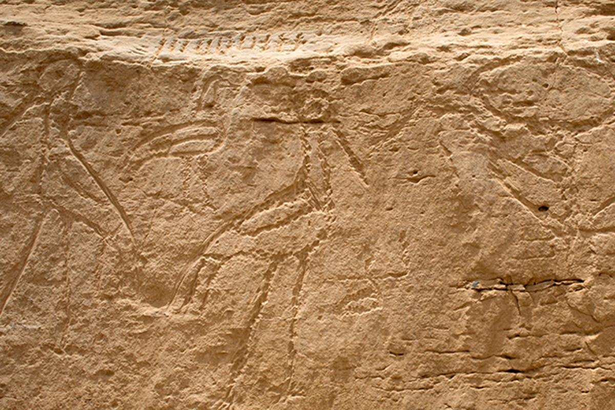 The newly-discovered rock inscriptions show, from right to left, a bull's head on a pole, two storks back to back and an ibis in between them