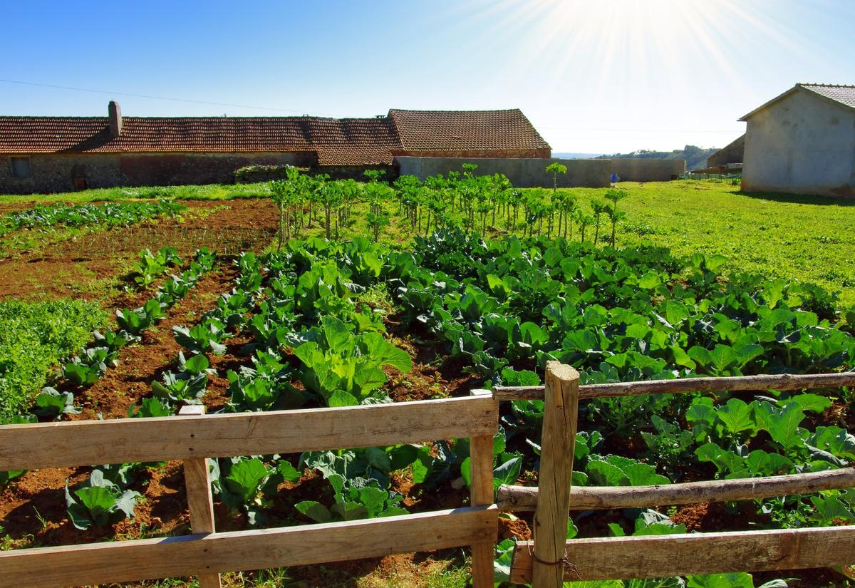 New research suggests organic farming has a greater impact on carbon emissions and the climate than conventional farming methods
