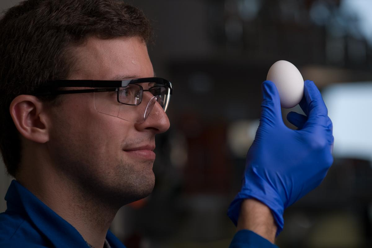 UC Irvine scientists have found a way to unboil an egg (Photo: Steve Zylius/UC Irvine)