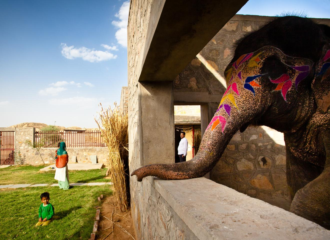 The Hathigaon elephants can visually connect with their caretakers (Photo: Carlos Chen)