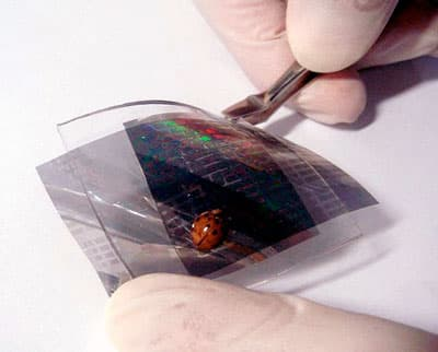 The electronic skin is sensitive enough to detect a lady beetle walking across it (Photo: Seoul National University)