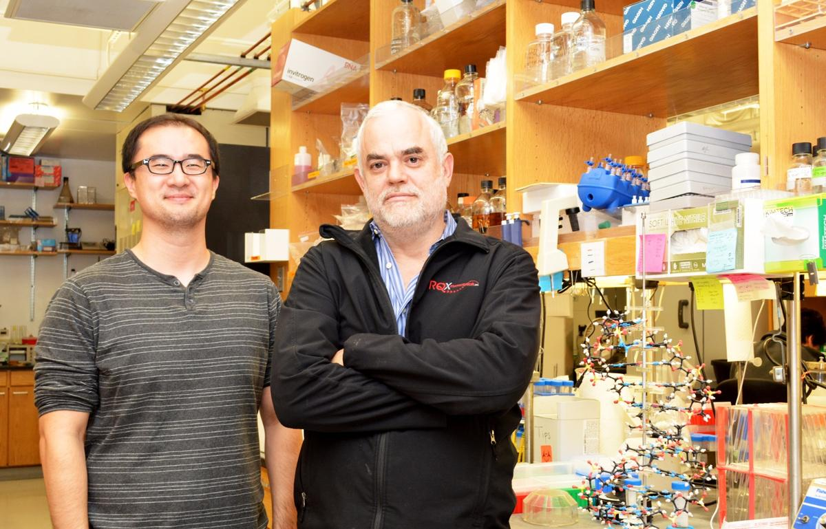 Professor Floyd Romesberg (right) and Graduate Student Yorke Zhang led the new study at The Scripps Research Institute