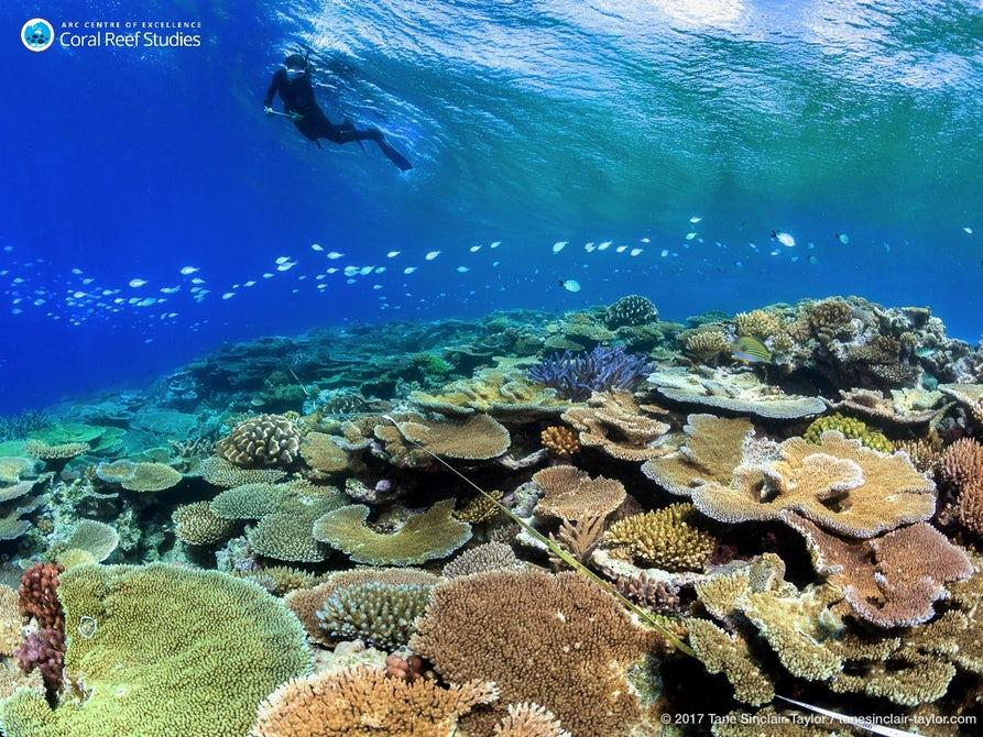 Researchers at work examining coral bleaching in the Great Barrier Reef