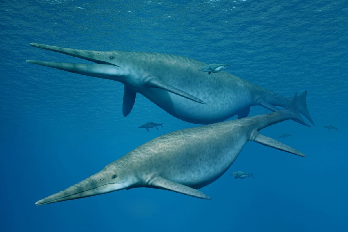 Ichthyosaurs were, on average, the size of a large dolphin, but a new jawbone suggests an unknown species that was approaching the length of a blue whale