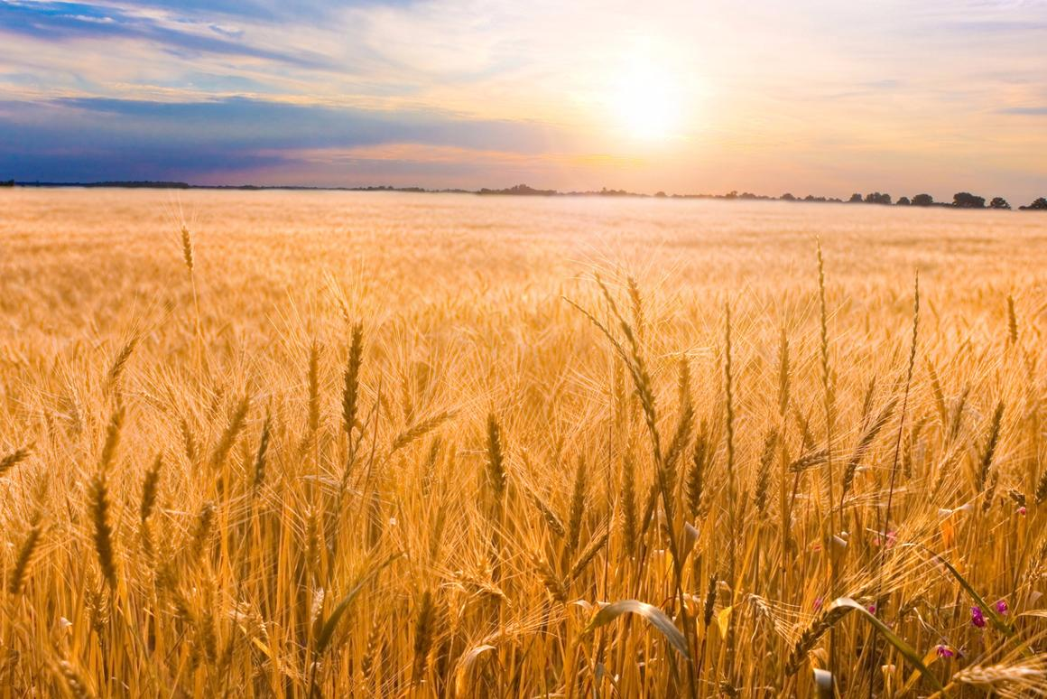 Is climate change making our food less nutritious?